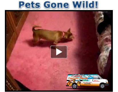 Pets Gone Wild!